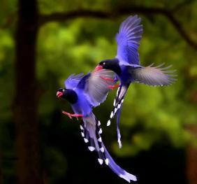 coolbirds