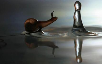 snaildrop