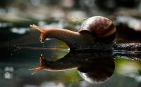 SnailManta